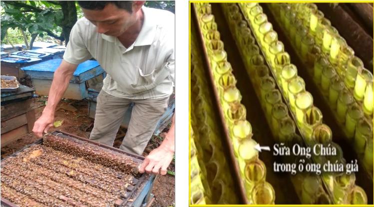 Bước 2: Bỏ khung cầu vào tổ ong