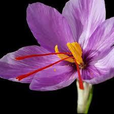 saffron Iran là gì